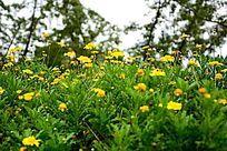 丛中小野菊