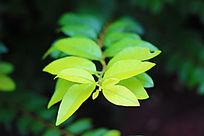 翠绿的叶子