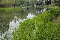 绿草青青小河湾