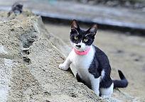 沙堆边的小猫