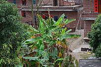 乡村香蕉房子图片