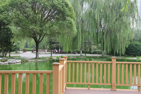 池塘垂柳和木栏杆