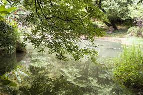翠绿的树枝和湖面