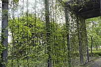 绿色藤条植物