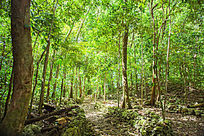 水母湖边的热带树林