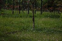 草丛里的水滴