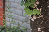 枯木中翠绿的嫩叶