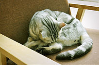 在椅子上睡觉的小猫