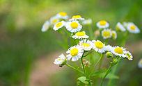 白色花卉特写
