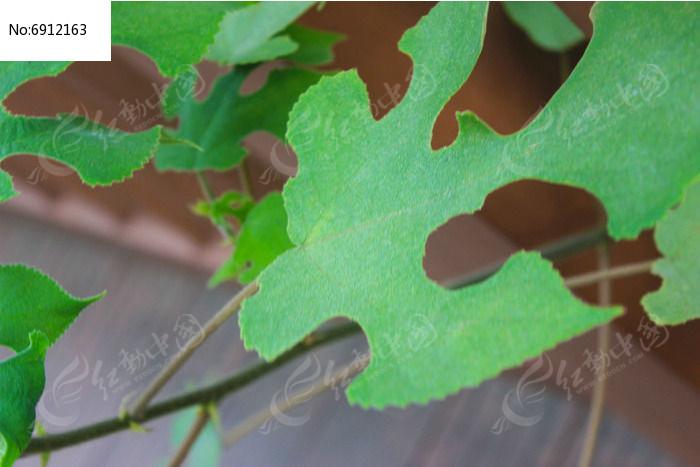抽象独特的绿色叶子图片