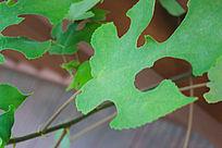 抽象独特的绿色叶子