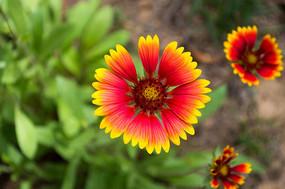 漂亮的红黄花朵