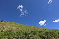 山坡上绿草发芽