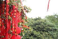泰国许愿树