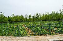 用栅栏围绕的菜园子