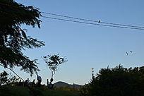 早上的天空分外蓝摄影