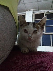 躲在身后发呆的小猫咪