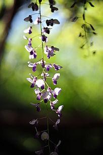 光影中的紫藤花