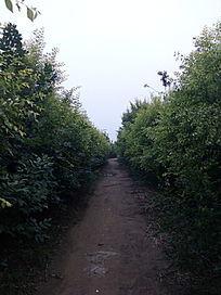林间意境小路