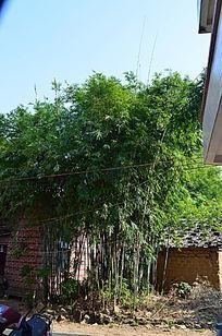 屋角的竹林风景图片