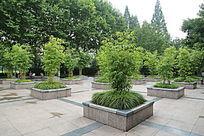 竹子和草丛的花坛