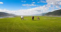 大草原风景素材