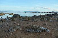 大海沙滩贝壳风光图片