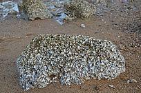 堆积的沙滩贝壳风景图片