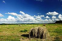 牧场草捆景观