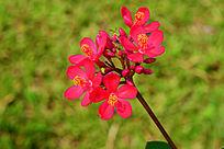 鲜艳的红花
