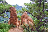 千山唐代古城山石与松树