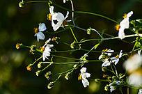花花草丛特写图片