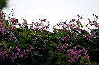 鲜艳的粉色小花风景图片