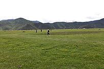 淡绿色的草地