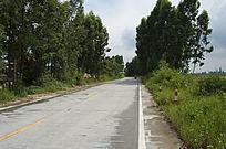 树林间的县道公路