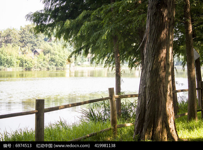 大树和湖面图片