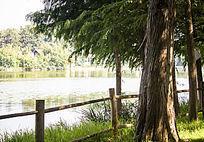 大树和湖面