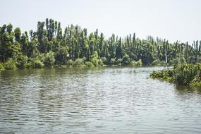 广阔的湖面和大树