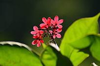 光影小红花风景图片