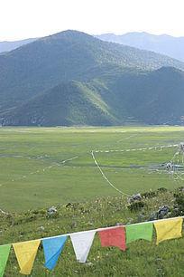 绿色草地草坪