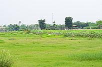 美丽的草地风景图片