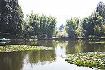清澈的湖水与荷花