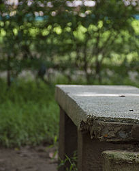 树荫下草丛中的石凳