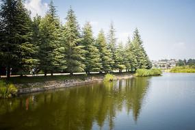 翠绿的树木和湖面