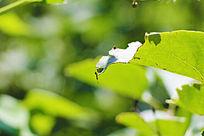 翠绿叶子上的蚂蚁