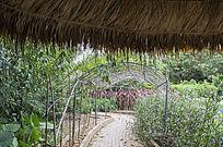 花卉种植基地
