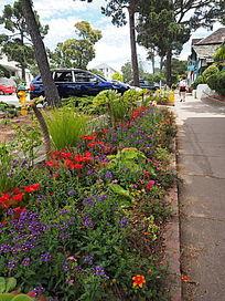 路边的观赏草花卉
