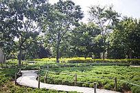 茂密的花丛和树木