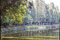茂密的树林和湖水