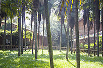 茂密的棕榈树